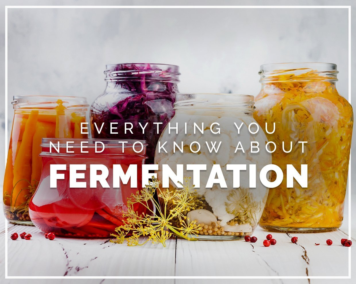 Everything you need to know about fermentation
