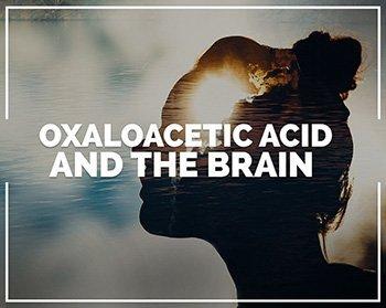 Oxaloacetic acid and the brain